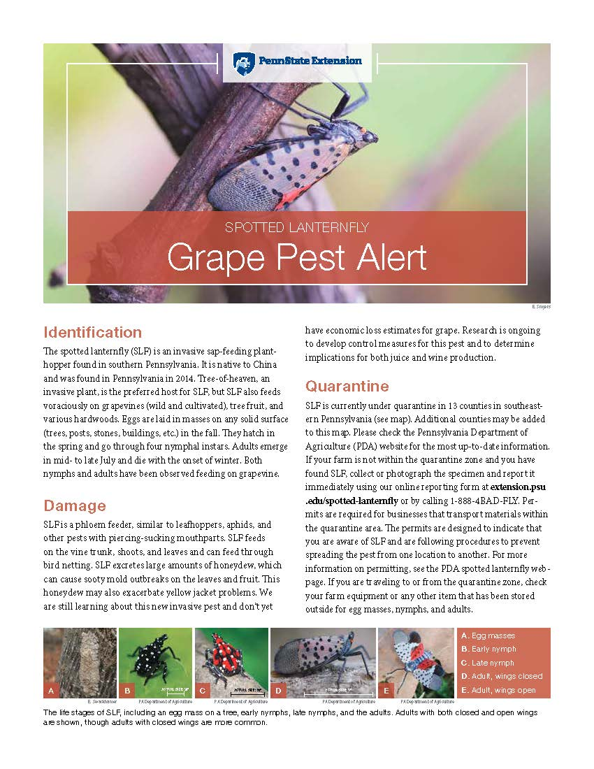 Spotted Lantern Fly New Grape Pest Alert
